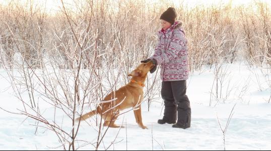 Élevage Red Shack Labradors, nous sommes un élevage professionnel de Labradors lignée 100% chasse.